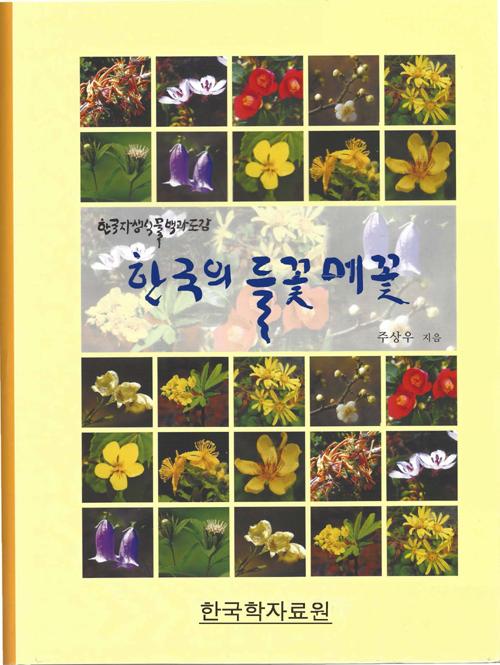 한국의 들꽃 메꽃